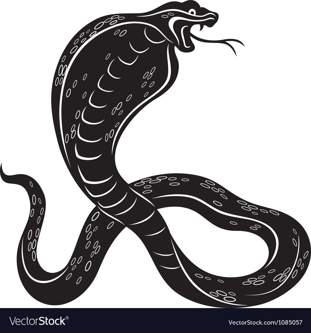Cobra snake vector | Price: 1 Credit (USD $1)