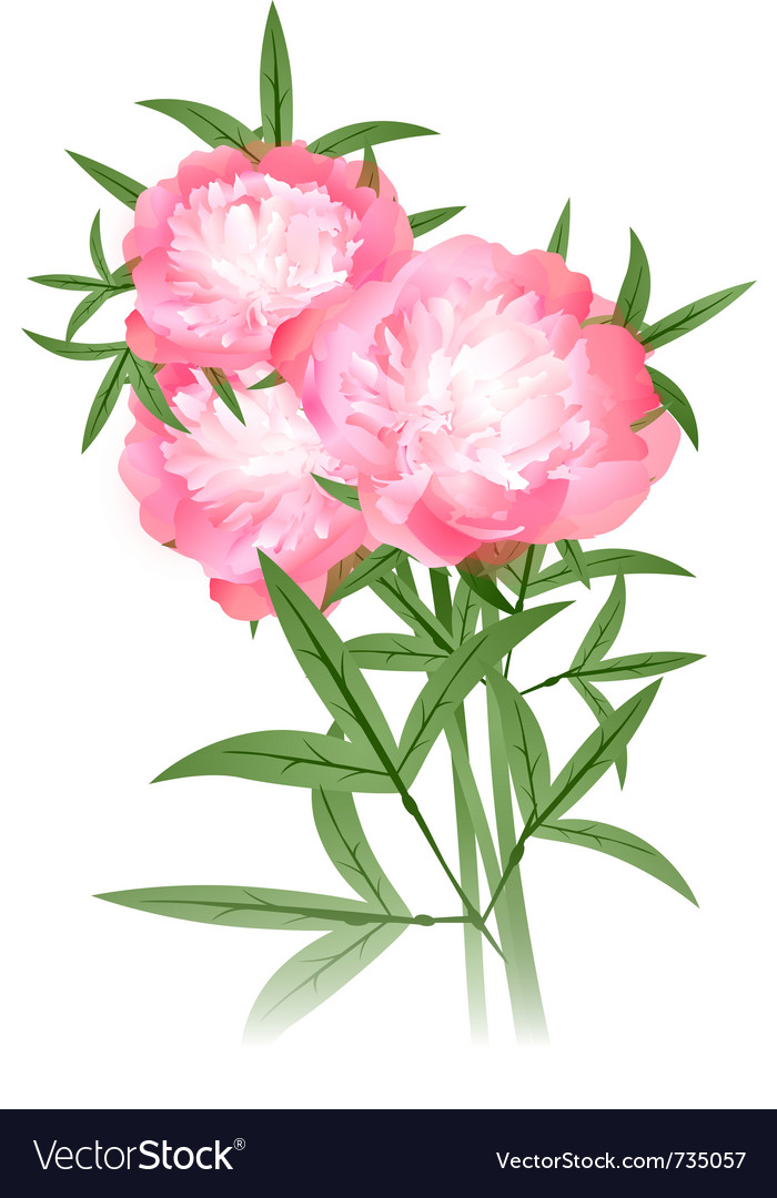 Peony flowers bouquet vector | Price: 1 Credit (USD $1)