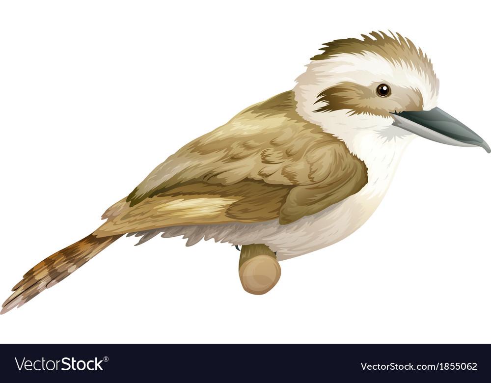 Kookaburra vector | Price: 1 Credit (USD $1)