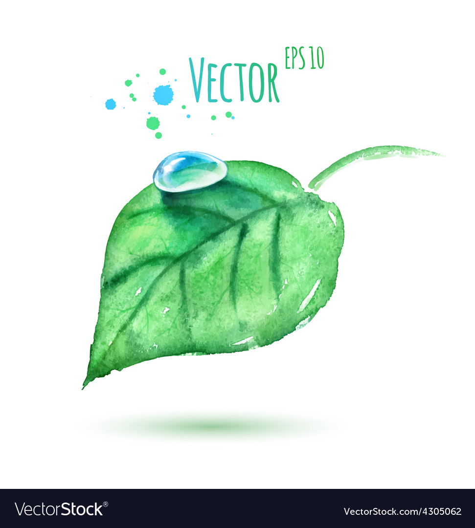 Watercolor leaf with water drop vector | Price: 1 Credit (USD $1)