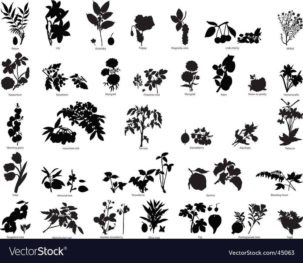 Berries and flowers silhouettes vector | Price: 1 Credit (USD $1)