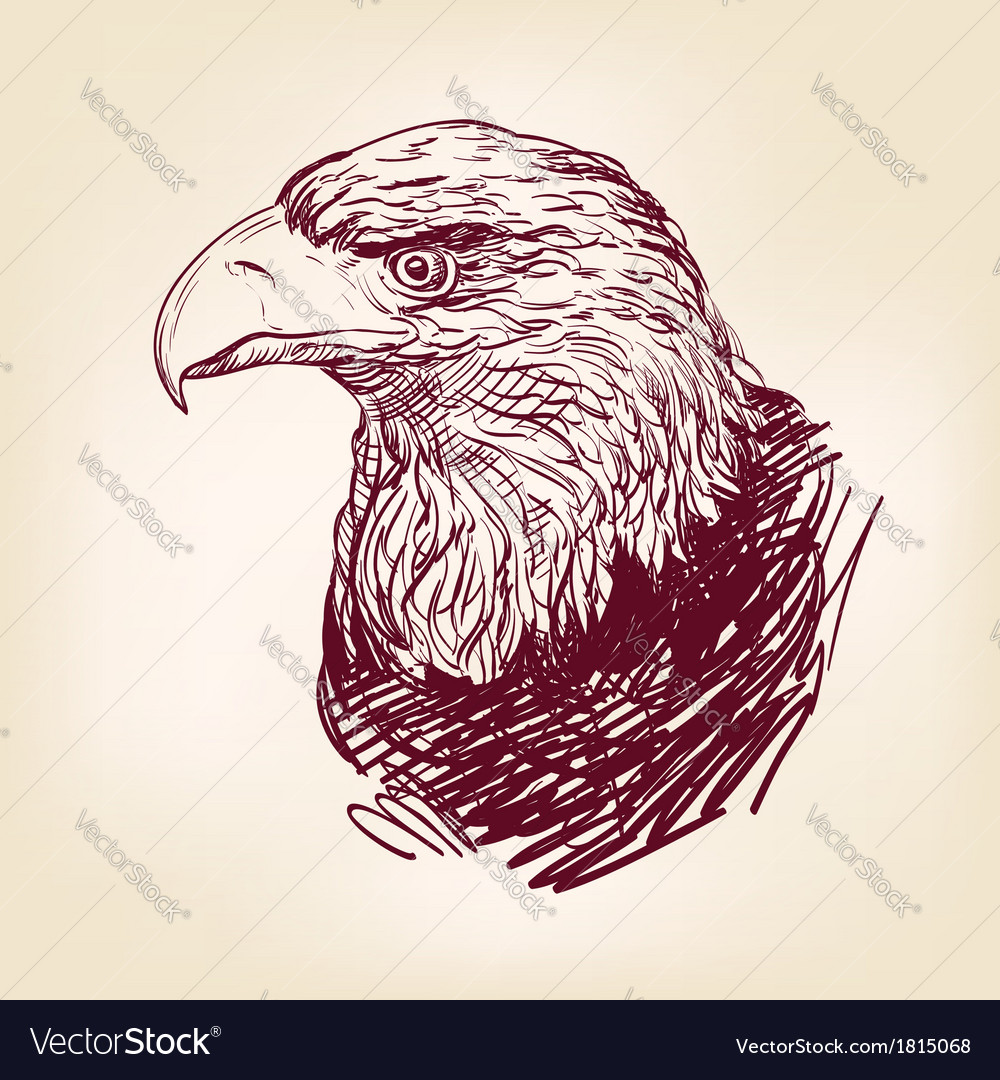 Eagle - vector | Price: 1 Credit (USD $1)