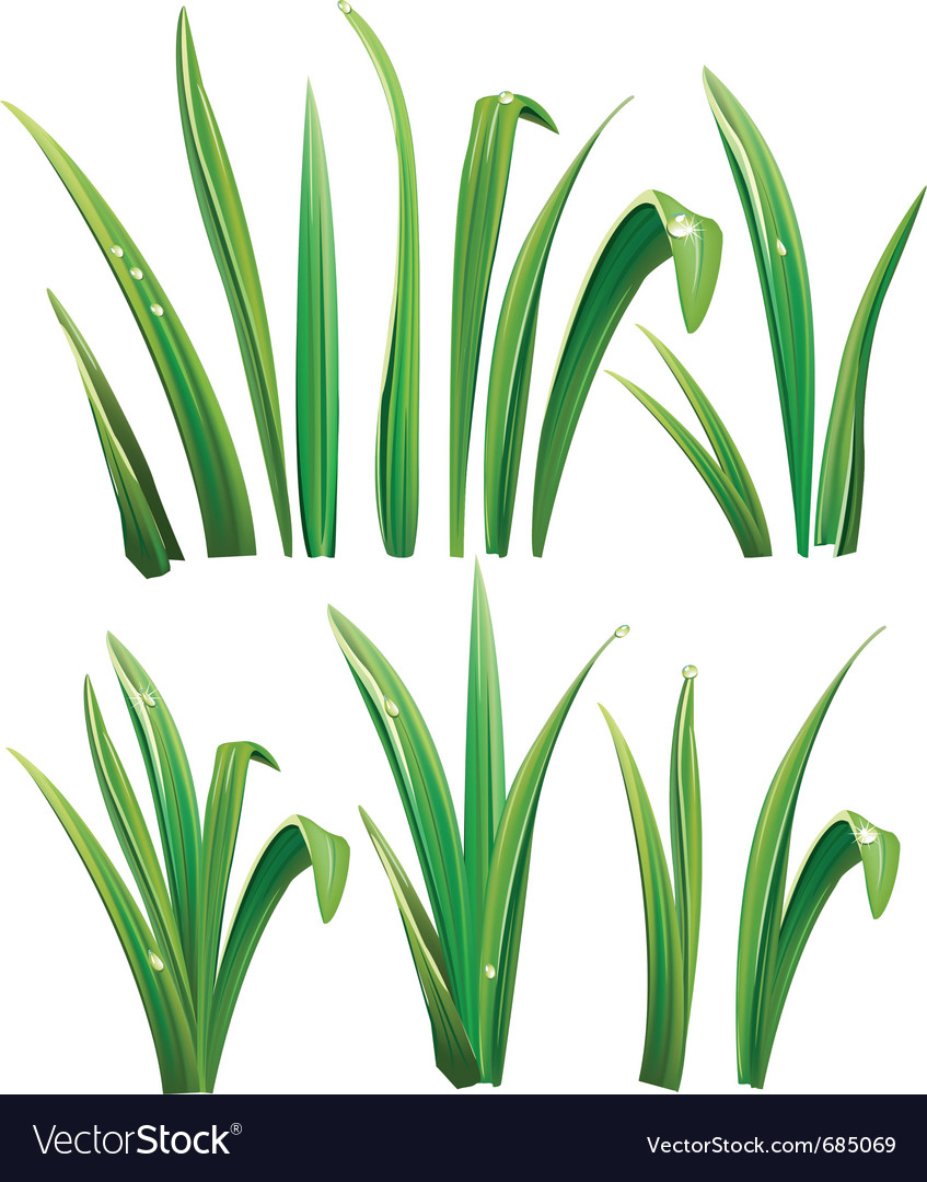 Green grass on white vector | Price: 1 Credit (USD $1)
