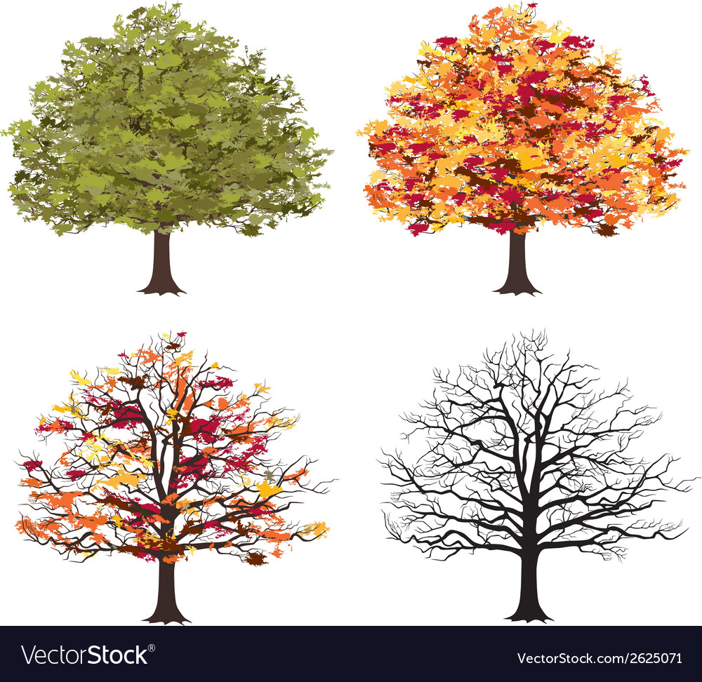 Different seasons of art tree vector | Price: 1 Credit (USD $1)