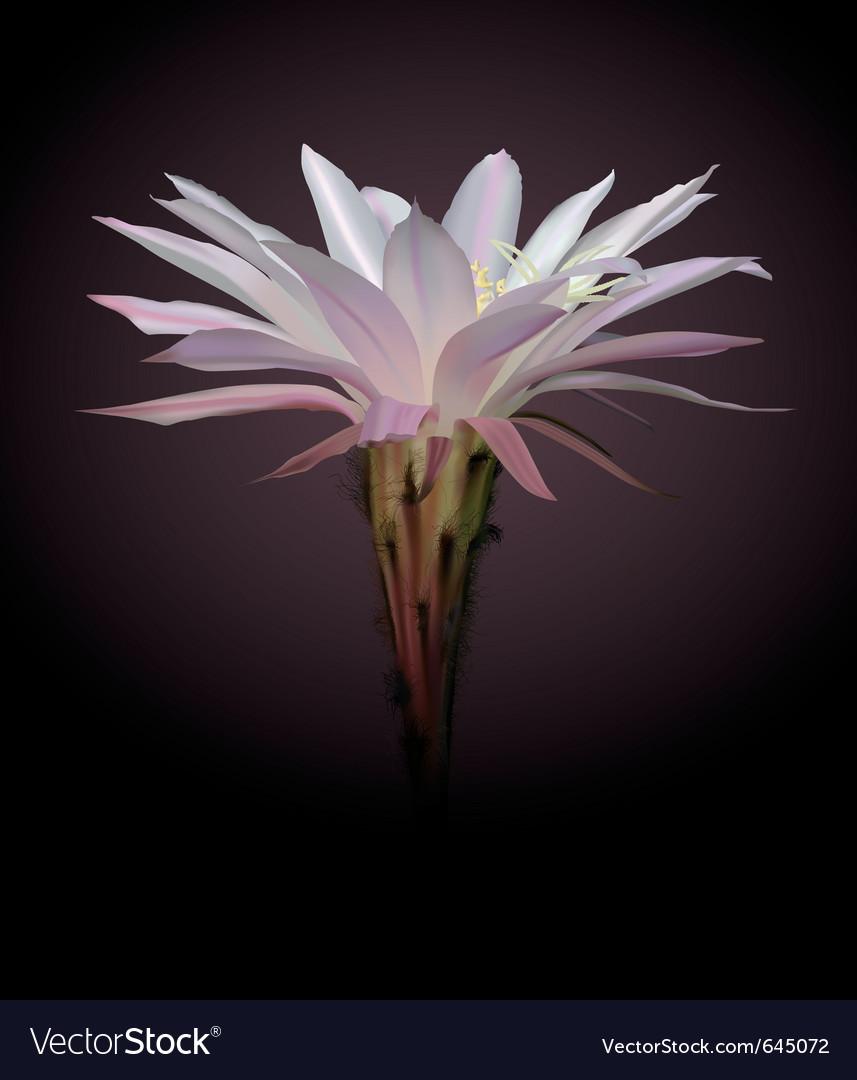 Cactus flower vector | Price: 1 Credit (USD $1)