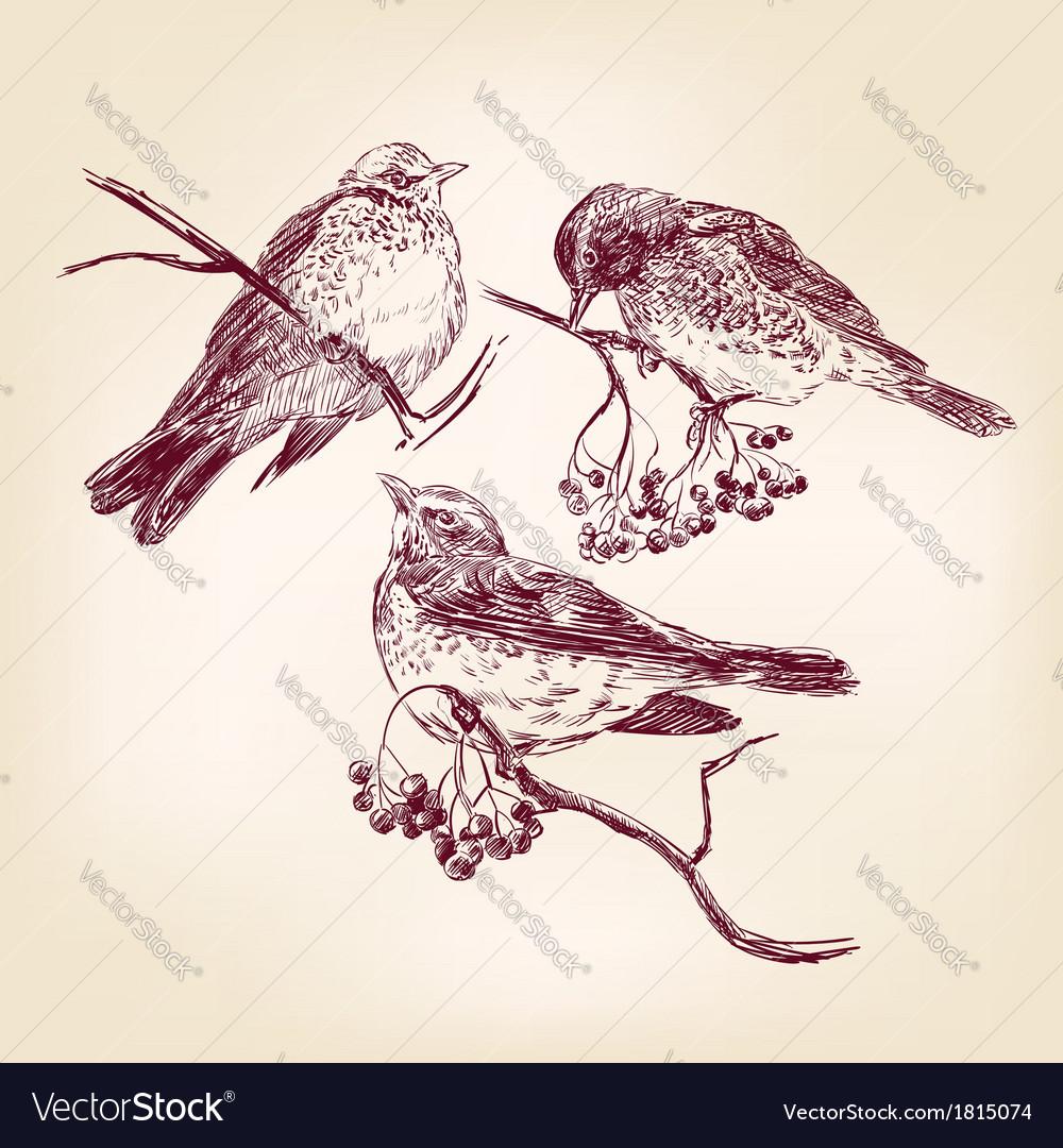 Bird hand drawn vector | Price: 1 Credit (USD $1)
