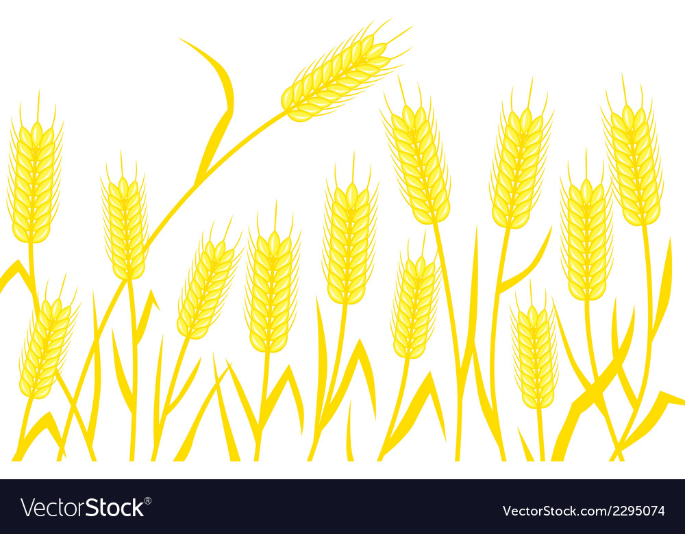 Corn background vector | Price: 1 Credit (USD $1)