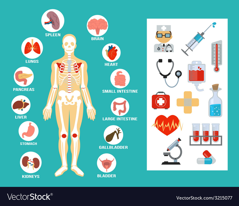 Anatomy flat icon set vector | Price: 1 Credit (USD $1)