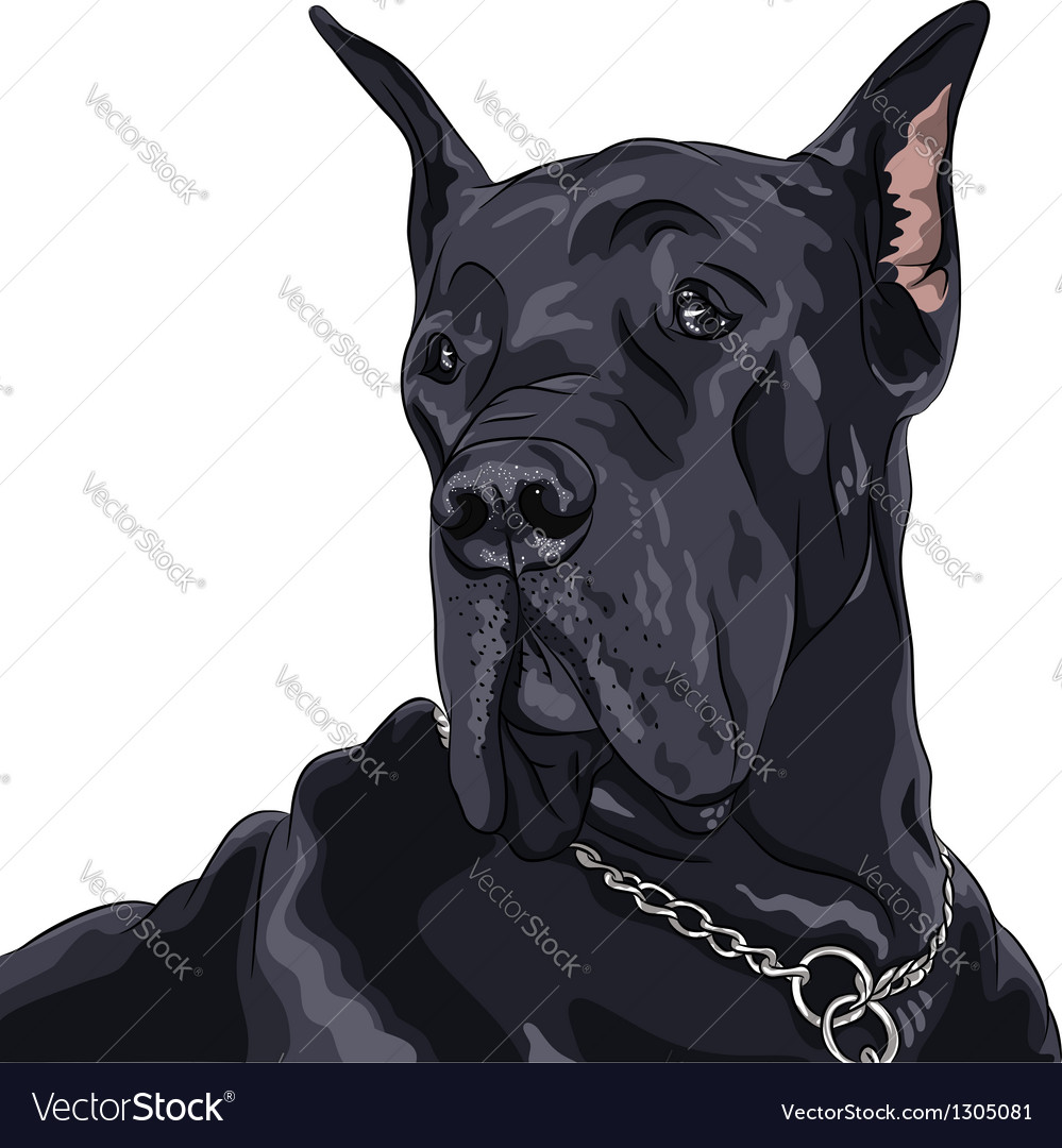 Black dog great dane breed vector | Price: 3 Credit (USD $3)