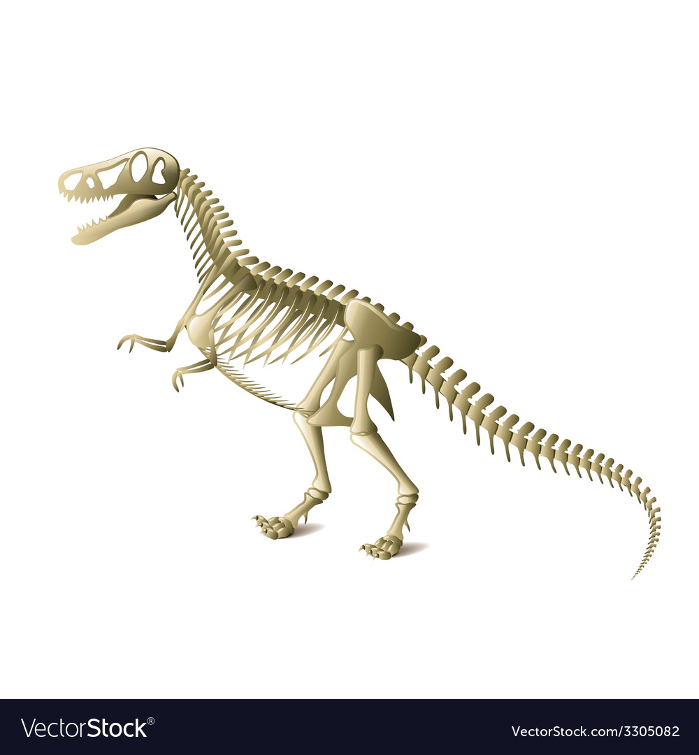 Dinosaur skeleton isolated vector | Price: 1 Credit (USD $1)