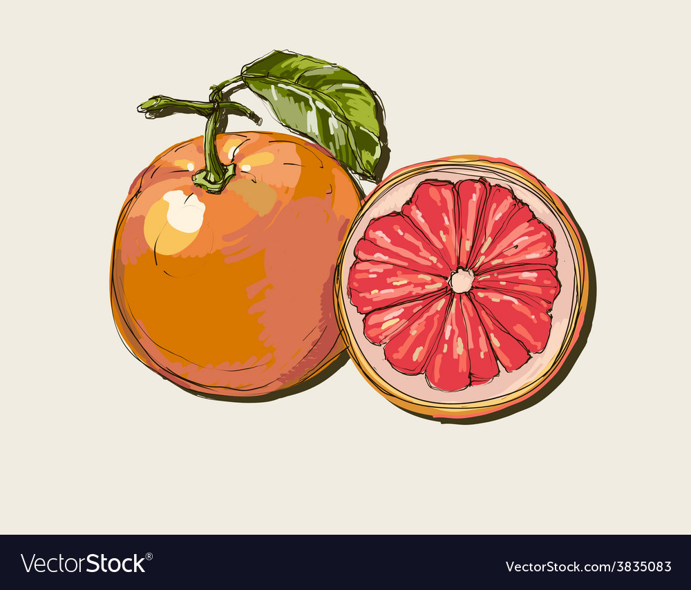 Fresh ripe grapefruit with leaves vector | Price: 1 Credit (USD $1)