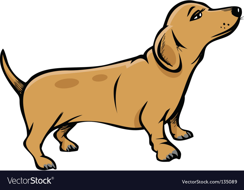 Weiner dog vector | Price: 1 Credit (USD $1)