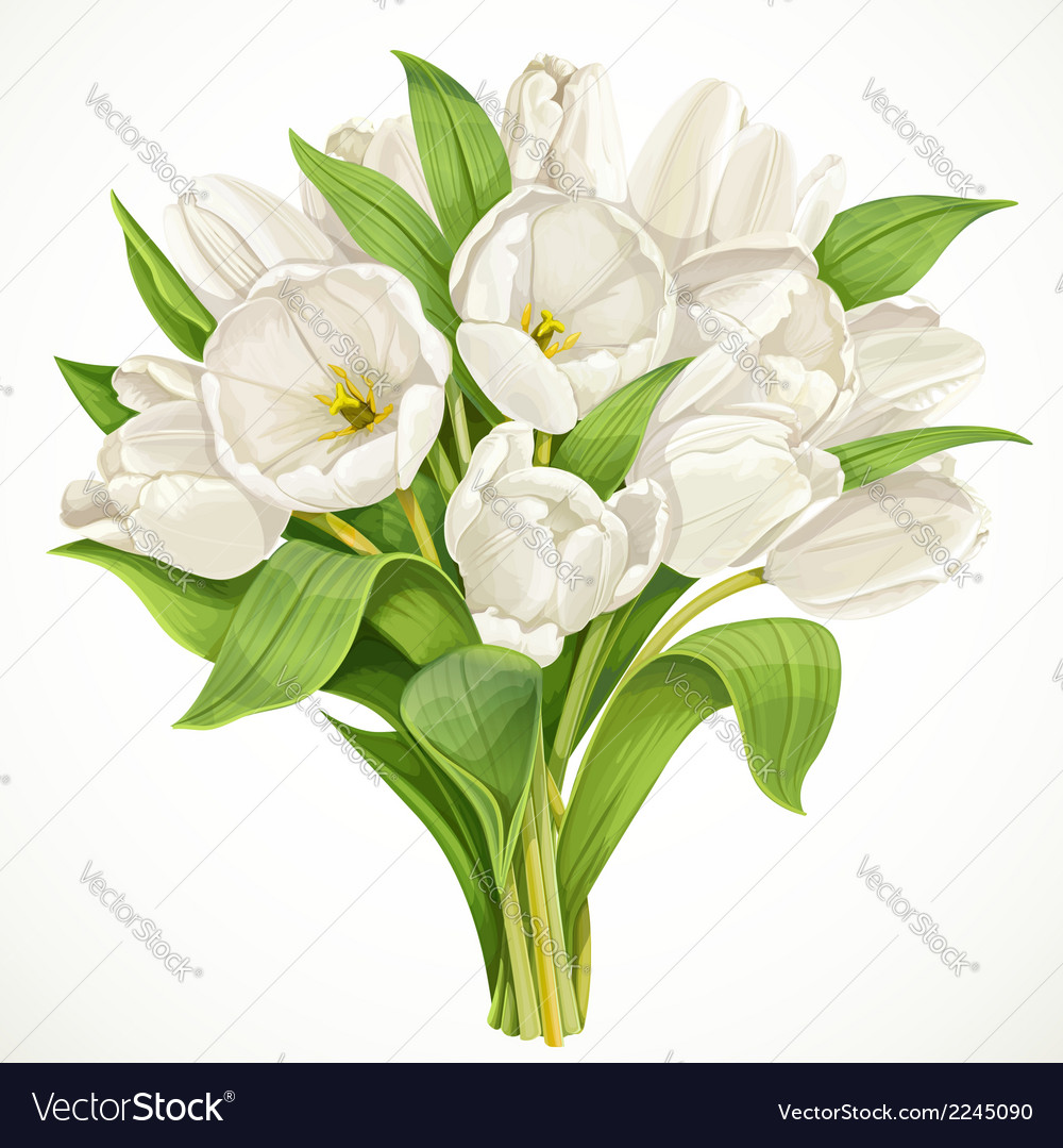 Bouquet of white tulips vector | Price: 1 Credit (USD $1)