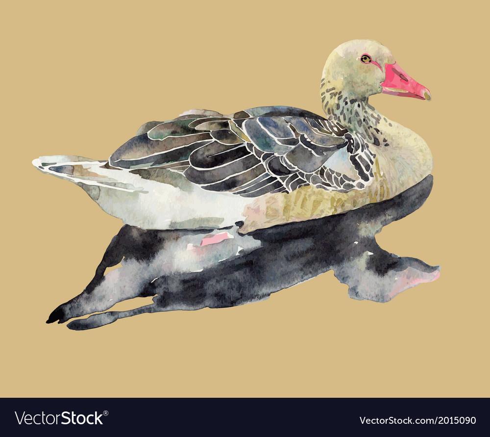 Hand draw watercolor bird duck vector | Price: 1 Credit (USD $1)