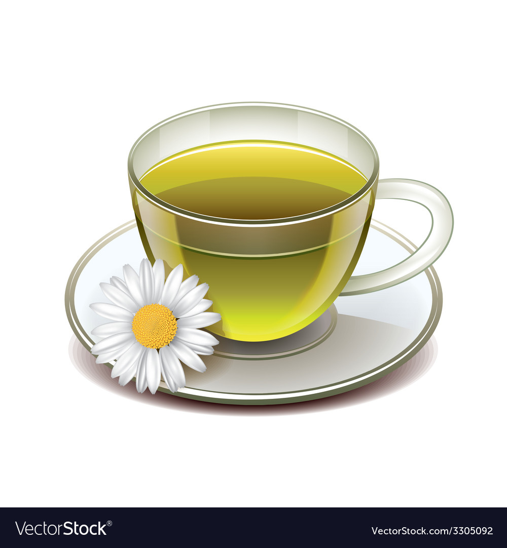 Green tea cup isolated vector | Price: 1 Credit (USD $1)