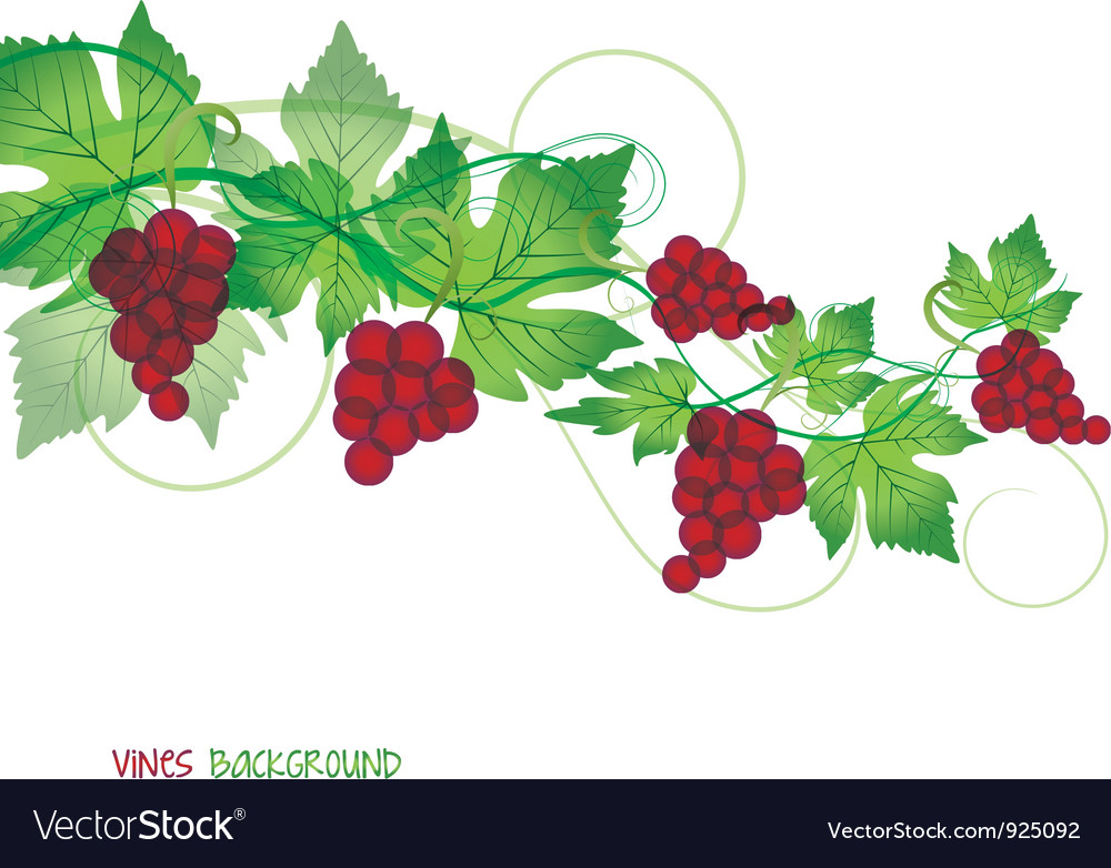 Red grapes vector | Price: 1 Credit (USD $1)