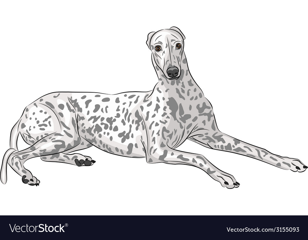 Whippet vector | Price: 1 Credit (USD $1)