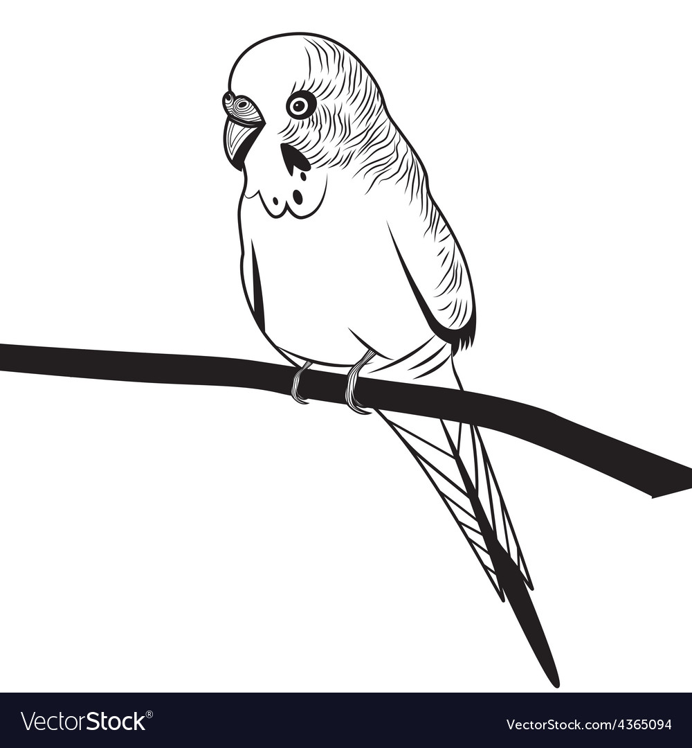Parrot budgie bird head for t-shirt sketch tattoo vector   Price: 1 Credit (USD $1)