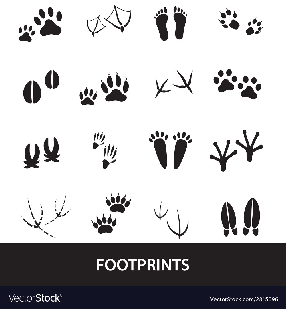 Basic animal footprints set eps10 vector | Price: 1 Credit (USD $1)