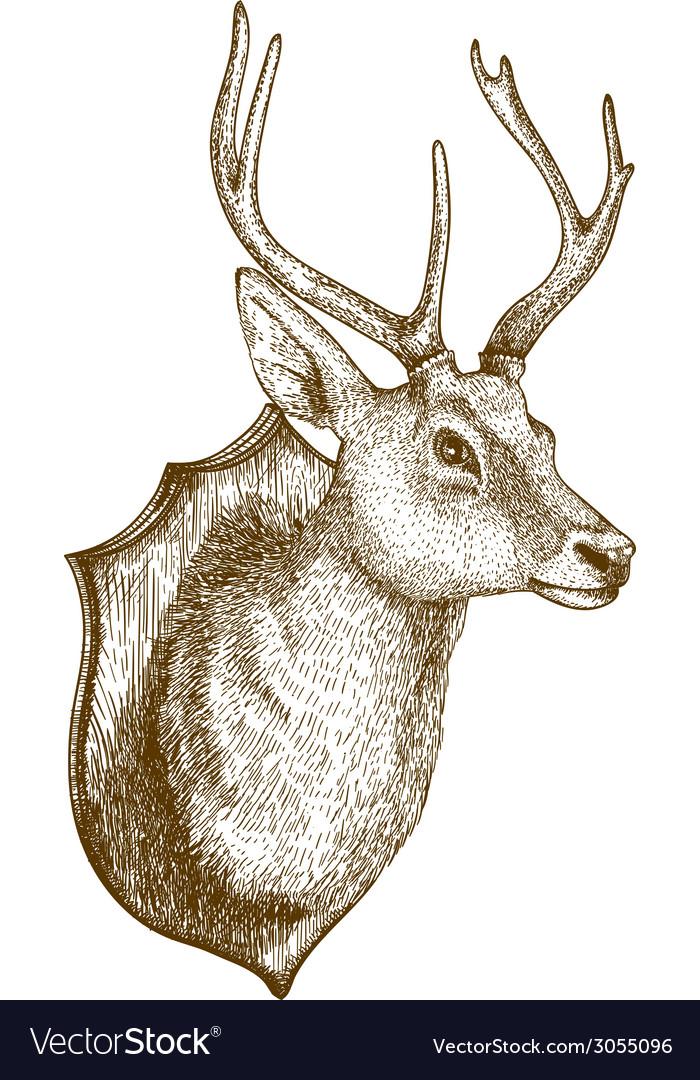 Engraving deer head vector | Price: 1 Credit (USD $1)