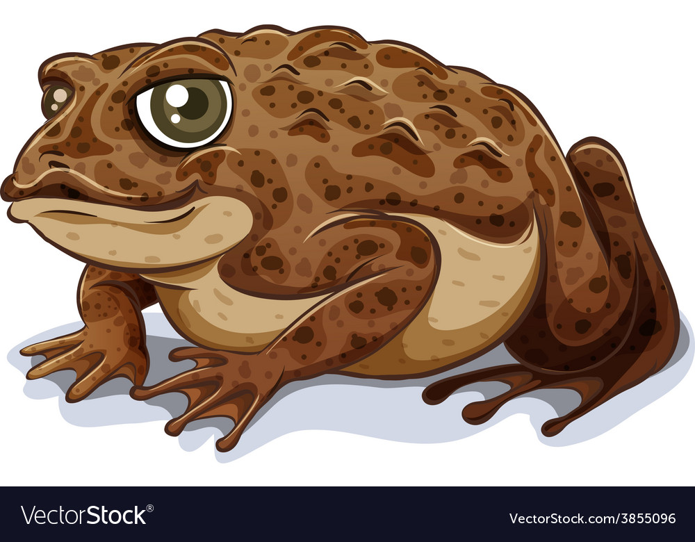 Toad vector | Price: 3 Credit (USD $3)