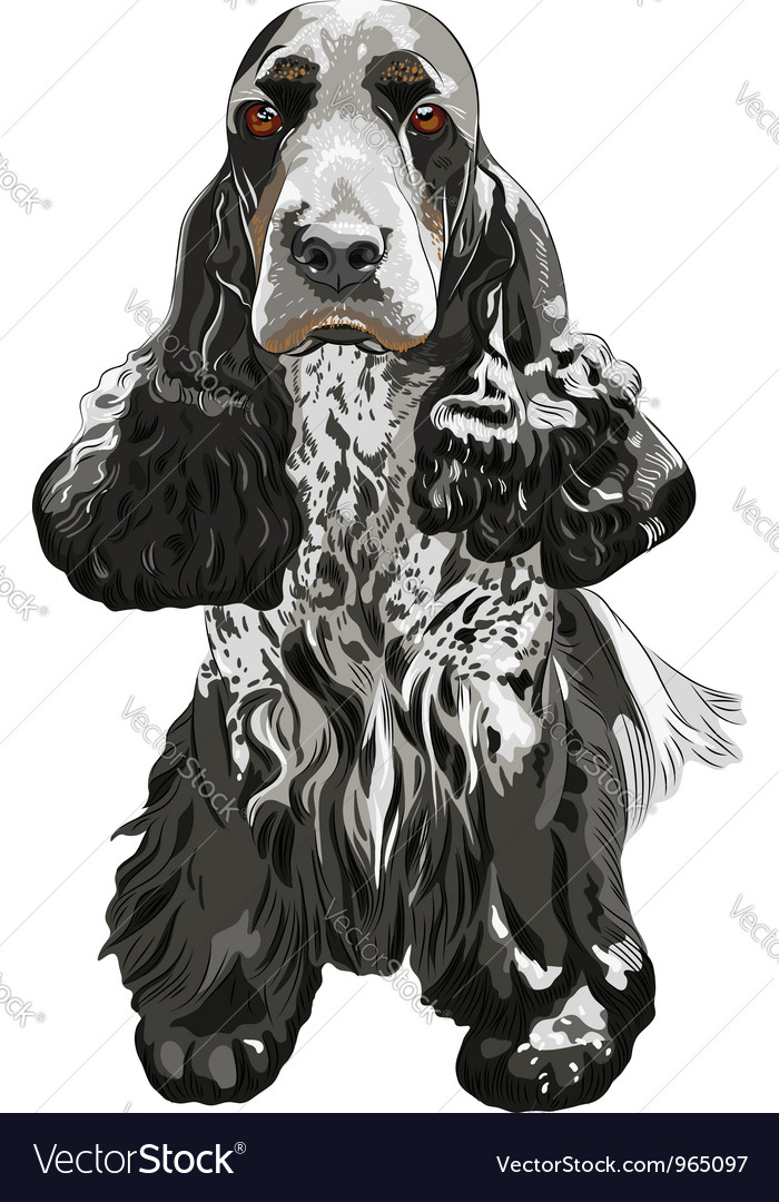 Gun dog english cocker spaniels sitting vector | Price: 3 Credit (USD $3)