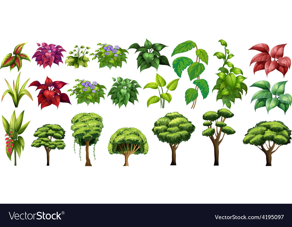 Trees and flowers vector   Price: 3 Credit (USD $3)