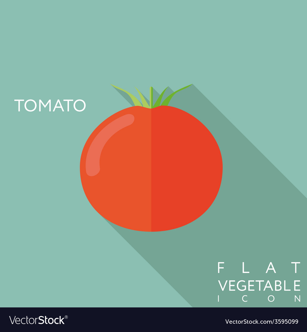 Tomato flat icon with long shadow vector | Price: 1 Credit (USD $1)
