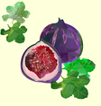 Figs polygon vector