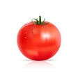 Tomato with water drops vector