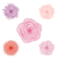 Set of beautiful colorful flowers floral vector