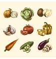 Vegetables sketch set color vector