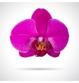 Single orchid flower vector