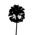 With single palm tree isolated on white background vector