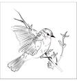 Birdsketch vector
