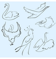 Birds design set vector