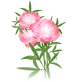 Peony flowers bouquet vector