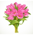 Bouquet of pink tulips vector