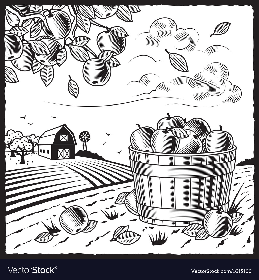 Landscape with apple harvest black and white vector | Price: 1 Credit (USD $1)