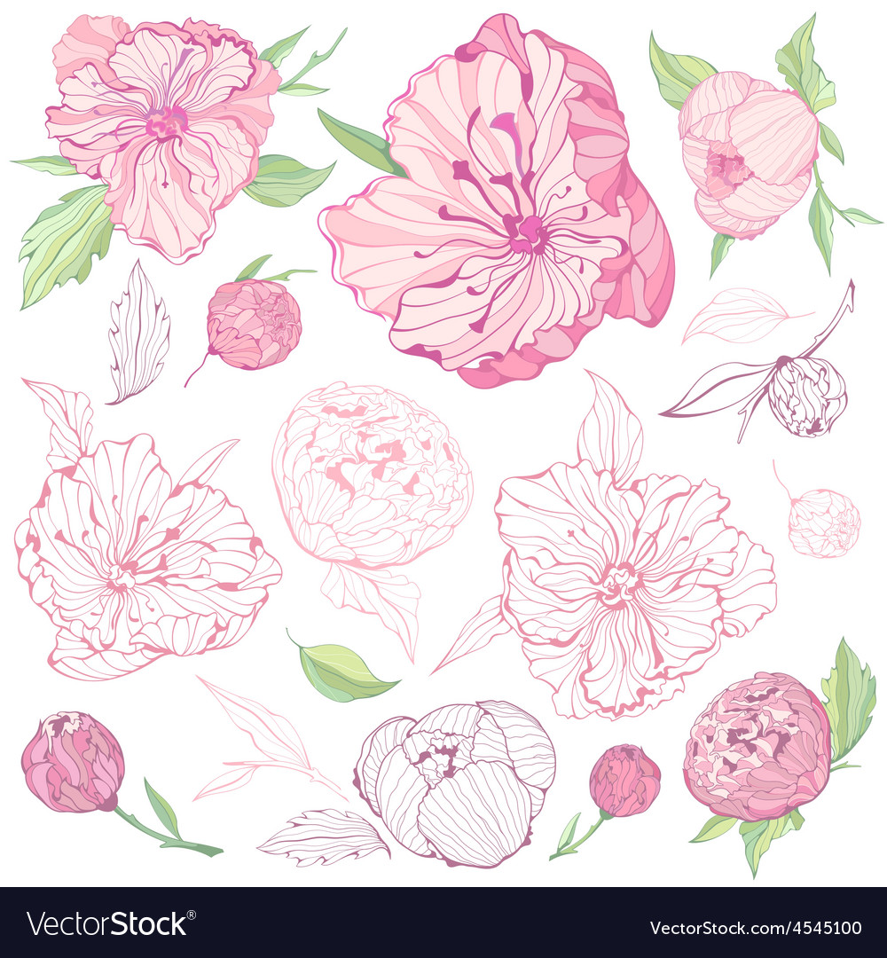 Set of isolated peony flowers vector | Price: 1 Credit (USD $1)