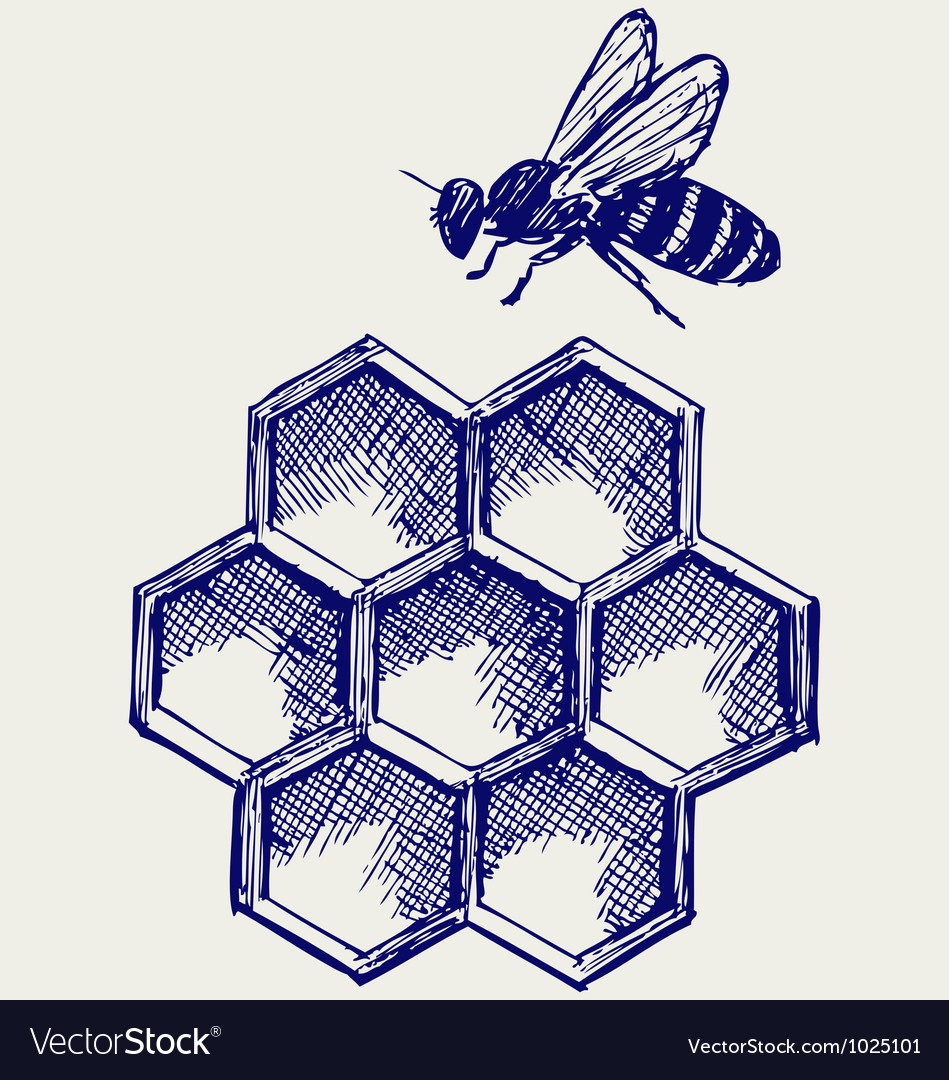 Working bee on honeycells vector | Price: 1 Credit (USD $1)