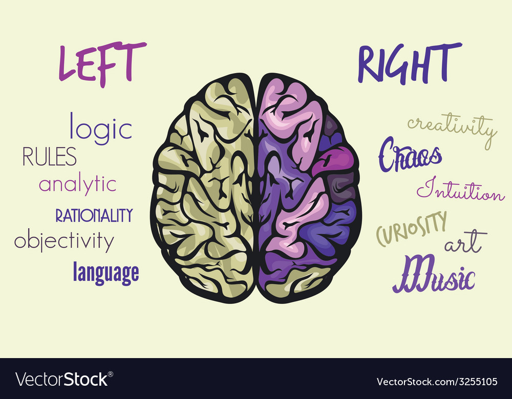 Brain dve hemisfere right left3 vector | Price: 1 Credit (USD $1)