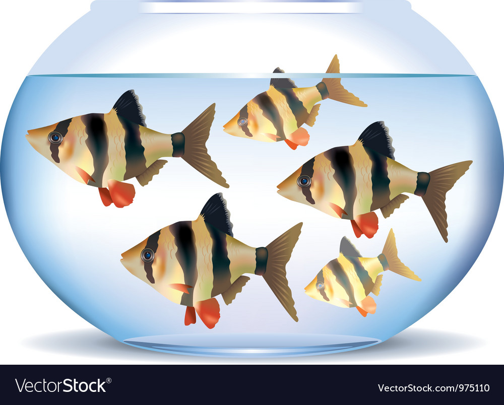 Aquarium with fish vector | Price: 3 Credit (USD $3)