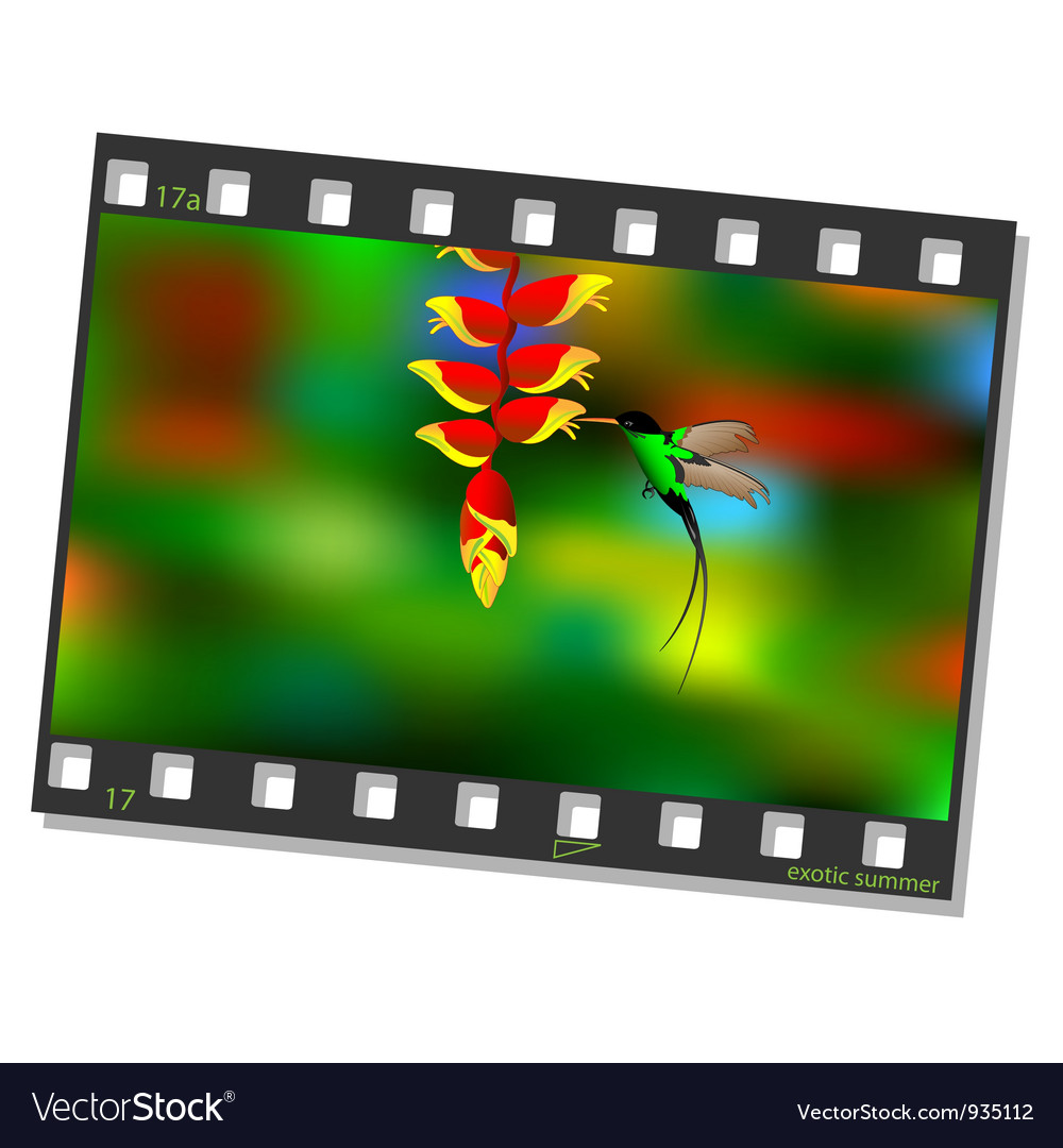 Film frame with hummingbird vector | Price: 3 Credit (USD $3)