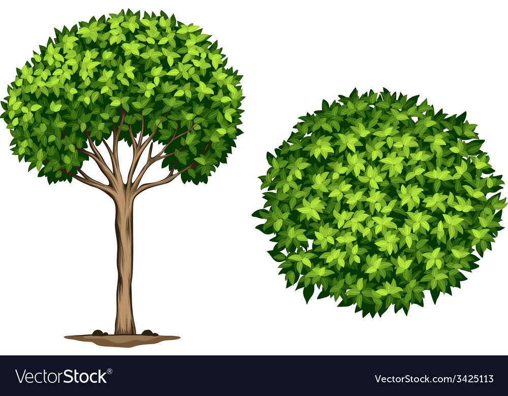 A laurel tree vector | Price: 1 Credit (USD $1)