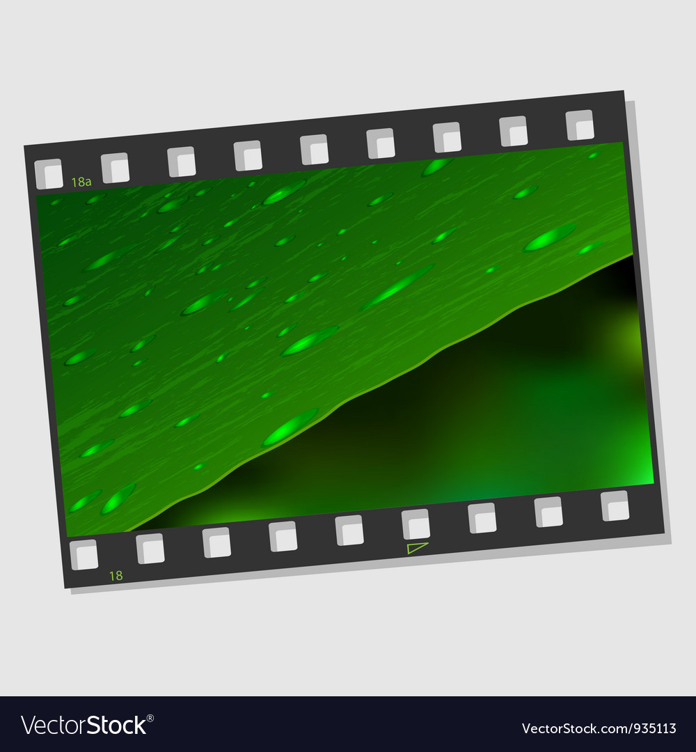 Film frame with leaf and drops vector | Price: 3 Credit (USD $3)