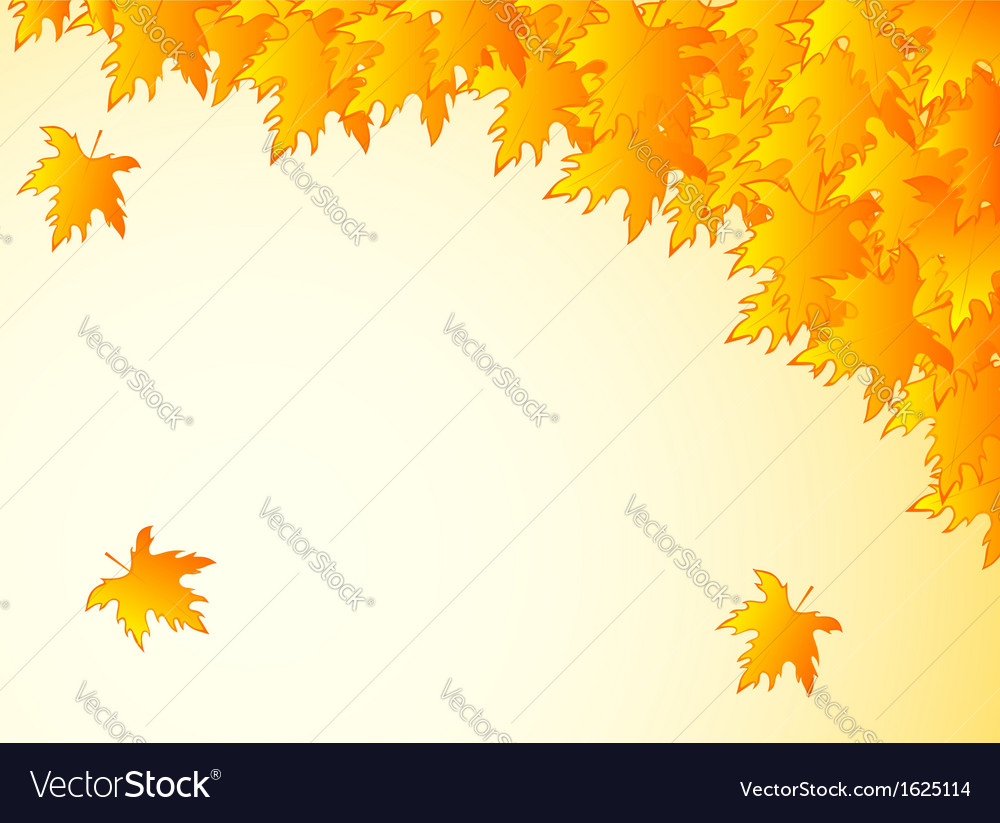 Background in warm colors with yellow maple leaves vector | Price: 1 Credit (USD $1)