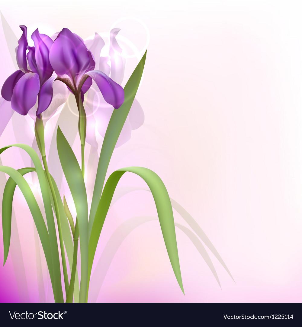 Purple iris flowers vector | Price: 1 Credit (USD $1)