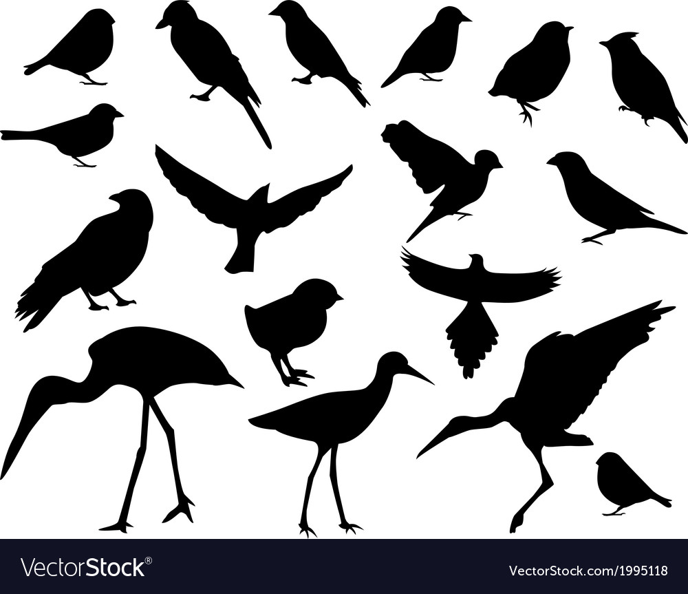 Set of silhouettes of birds vector | Price: 1 Credit (USD $1)