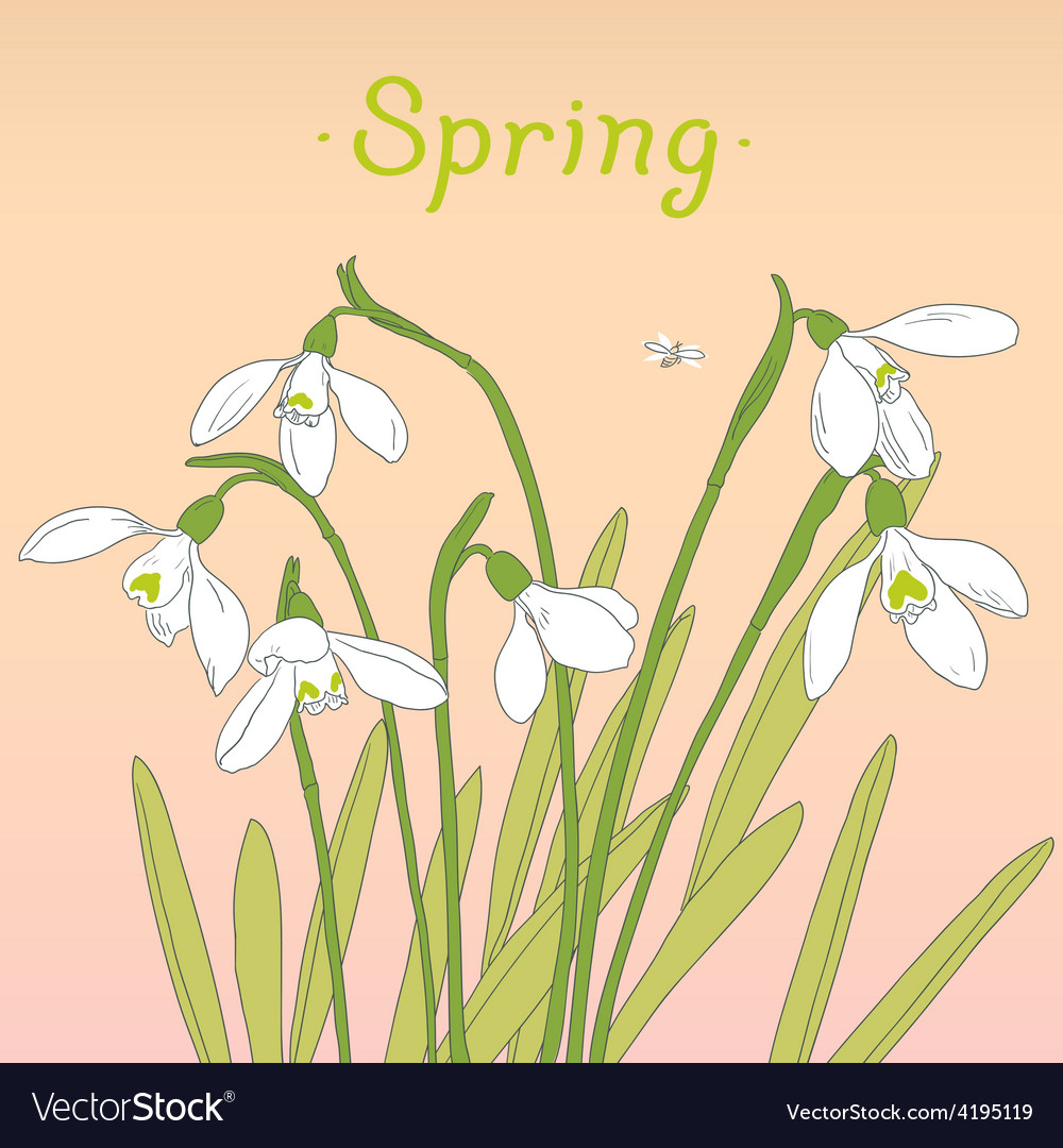 Snowdrops spring bouquet hand-drawn card vector | Price: 1 Credit (USD $1)